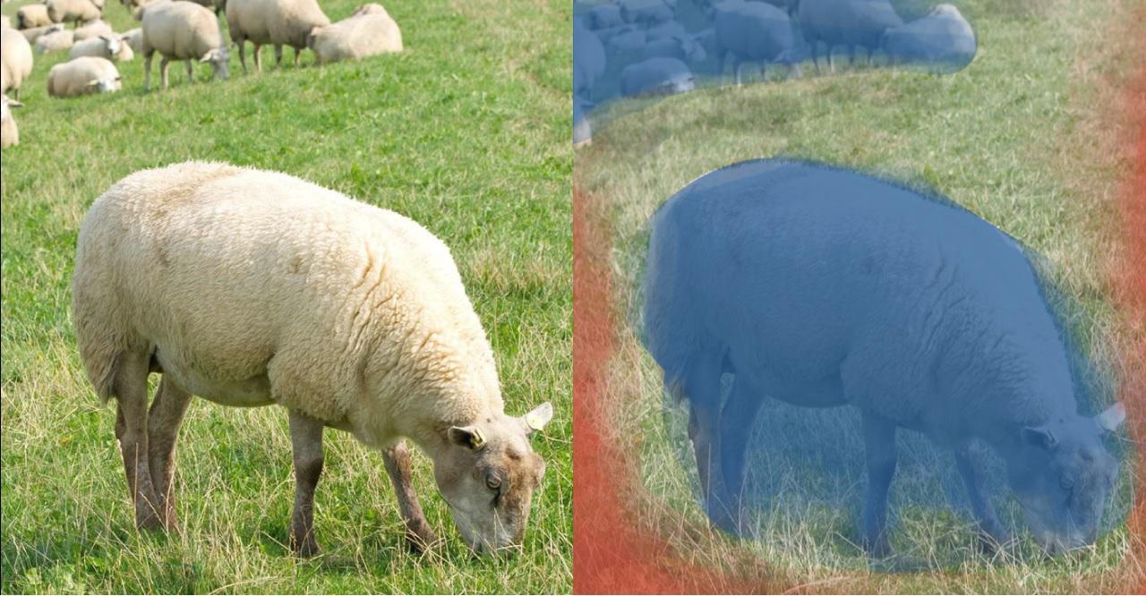 Sự khác biệt giữa Thị giác máy tính và Xử lý hình ảnh (Computer vision vs Image processing)